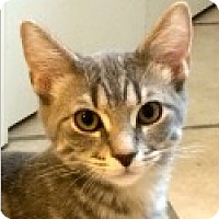 Adopt A Pet :: Freddy - Pittsboro, NC