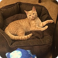 Adopt A Pet :: Tucker - Downingtown, PA