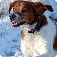 Adopt A Pet :: CO/King - Walton, KY