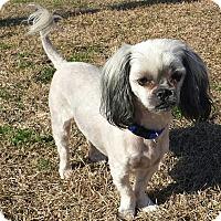 Adopt A Pet :: BARNEY - Cranston, RI