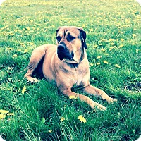 Adopt A Pet :: Daiquiri - Surrey, BC