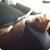 Adopt A Pet :: Sierra -Adopted! - Huntsville, ON