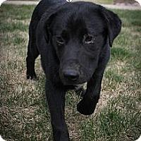 Adopt A Pet :: Daniel - Broomfield, CO
