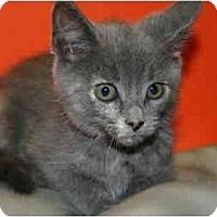 Adopt A Pet :: ELLEN - SILVER SPRING, MD