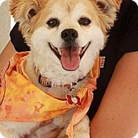 Adopt A Pet :: Boz - san diego, CA