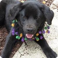 Adopt A Pet :: Beau - New Boston, NH