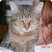 Adopt A Pet :: Simba - Pendleton, OR