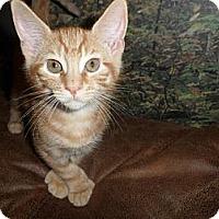 Adopt A Pet :: Leo - Norwich, NY
