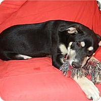 Adopt A Pet :: Buddy  ADOPTED!! - Antioch, IL
