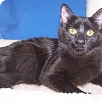 Adopt A Pet :: K-Alice1-Calypso - Colorado Springs, CO
