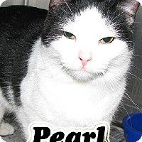 Adopt A Pet :: #10 Pearl-fostered DN - Lawrenceburg, KY