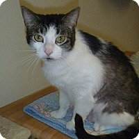 Adopt A Pet :: Princess - Hamburg, NY