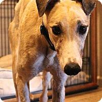 Adopt A Pet :: Addison - Tucson, AZ