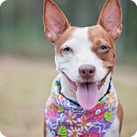 Adopt A Pet :: Bella - Kingwood, TX