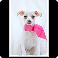 Adopt A Pet :: Diana - Tustin, CA