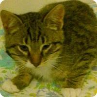 Adopt A Pet :: Gracie` - Woodland, CA