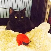Adopt A Pet :: Blanche - Lakeland, FL