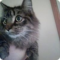 Adopt A Pet :: Remy - Ashville, OH
