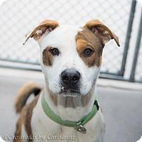 Adopt A Pet :: Raggy - Sierra Vista, AZ