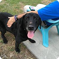 Adopt A Pet :: Edward - Charleston, SC