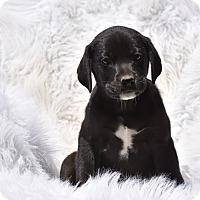Adopt A Pet :: Trinity - Groton, MA