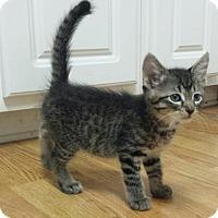 Adopt A Pet :: Traveler - Crocker, MO