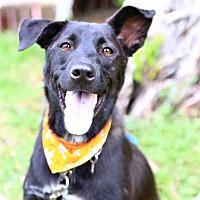 Adopt A Pet :: Lambo - San Francisco, CA