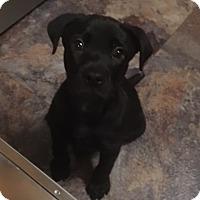 Adopt A Pet :: Chico - Destrehan, LA