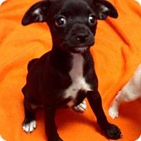 Adopt A Pet :: Bess (ARSG) - Santa Ana, CA