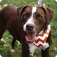 Adopt A Pet :: Clyde - Mayflower, AR