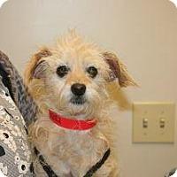 Adopt A Pet :: Gia - Wildomar, CA