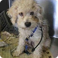Adopt A Pet :: Junior - Encino, CA