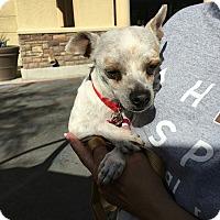 Adopt A Pet :: Whitey - Las Vegas, NV