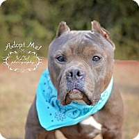 Adopt A Pet :: Onyx - Fort Valley, GA