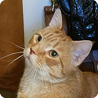 Adopt A Pet :: Oliver - Fairfax, VA