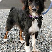 Adopt A Pet :: Dasher - Bellingham, WA