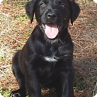 Adopt A Pet :: Comet - Bozrah, CT