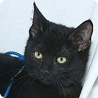 Adopt A Pet :: Xenia V - Sacramento, CA