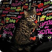 Adopt A Pet :: Cal - Oxford, NY