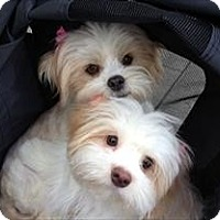 Adopt A Pet :: Willow and Ivy - Playa Del Rey, CA