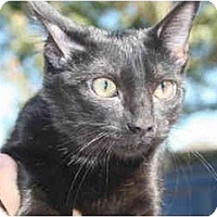 Adopt A Pet :: Inky Dink - Pearland, TX