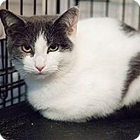 Adopt A Pet :: Xander - Westfield, MA