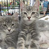 Adopt A Pet :: Kitten Palooza - SALE! - Vero Beach, FL