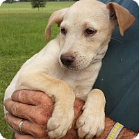Adopt A Pet :: Sissy - Williston, FL