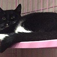 Adopt A Pet :: Silvia - Oakland, OR