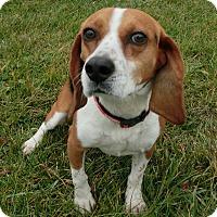 Adopt A Pet :: BEAUREGARD - New Cumberland, WV