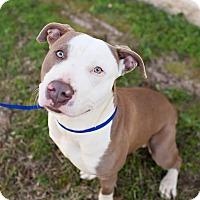 Adopt A Pet :: Casey Jones - Lawrenceville, GA
