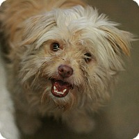 Adopt A Pet :: Robbie - Canoga Park, CA