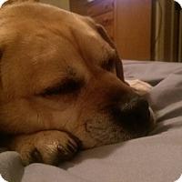 Adopt A Pet :: Hugo - Ogden, UT