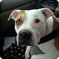 Adopt A Pet :: Allie - New Richmond,, WI